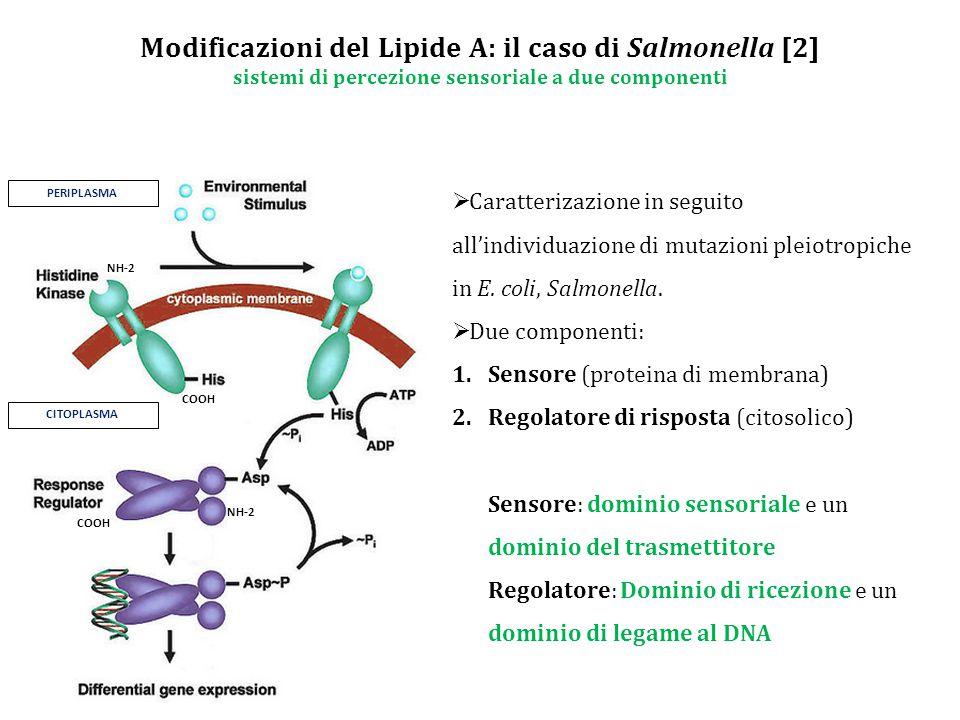 Modificazioni del Lipide A: il caso di Salmonella [2] sistemi di percezione sensoriale a due componenti